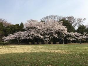 O公園20180403 (3)-1280